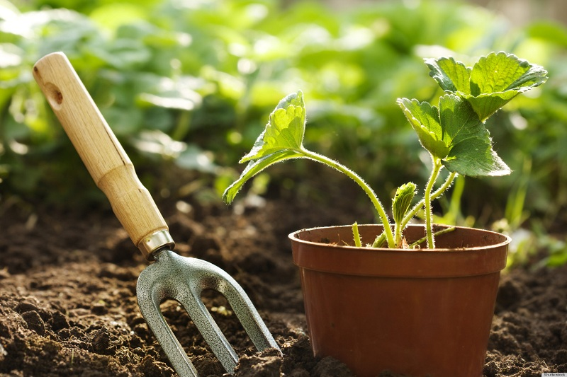 Top 12 Gardening Blogs In India Baggout