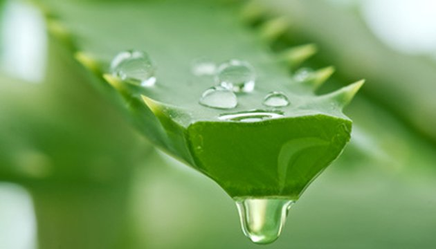 Make your Aloe Vera shampoo